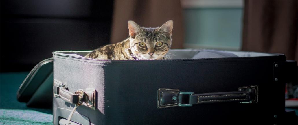 Come portare il gatto nel Regno Unito